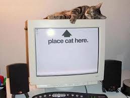 computer cat for customer satisfaction