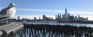 New York City skyline with seagull in foreground